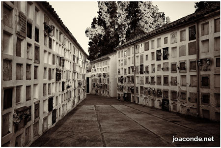 Cementerio de la Salud (Córdoba)